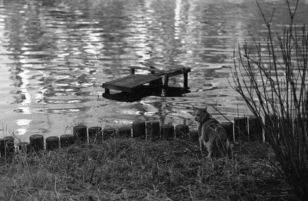 向島百花園の猫