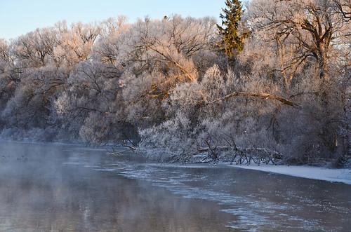 morning trees winter mist ontario canada nature water sunrise river landscape nikon guelph riversidepark speedriver