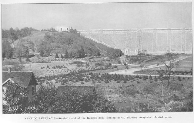 Report 1920 Plantings