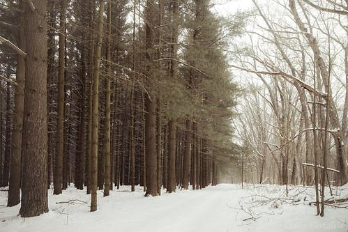 park trees winter snow nature landscape woods forrest outdoor trail deciduous pint coniferous oakopenings