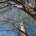 Garden Inventory: Ash Tree - 07