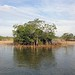 Everglades: Flora