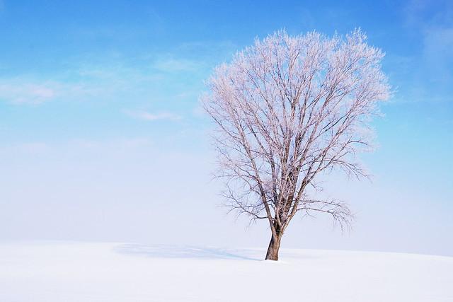 霧氷の哲学の木2