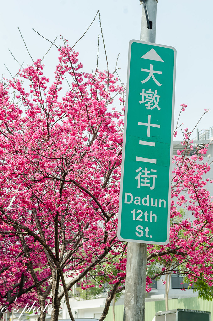 台中市區 賞櫻 惠文路VS大墩十二街