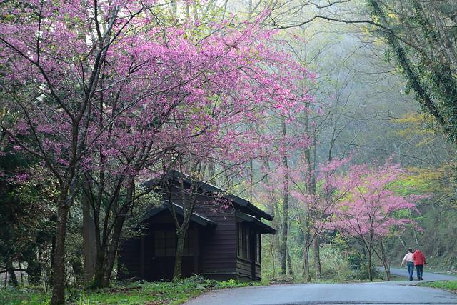 2013.02.28 新竹 / 觀霧國家森林遊樂區