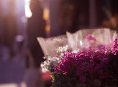 店頭の花々