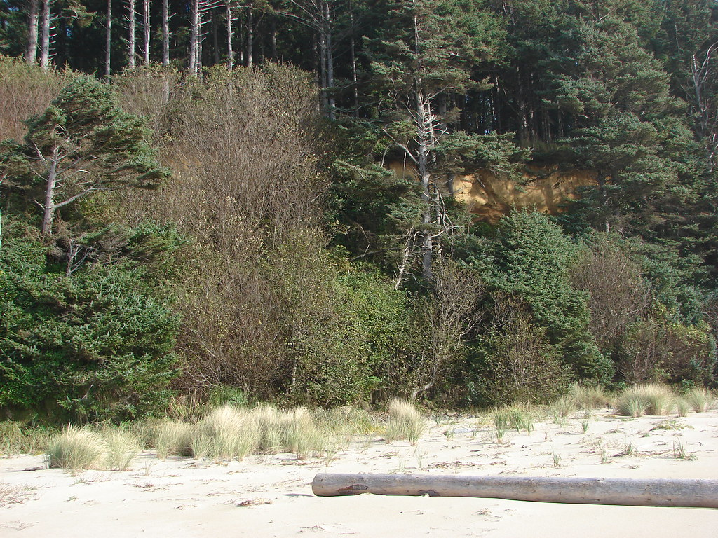 Beach south of Cape Lookout
