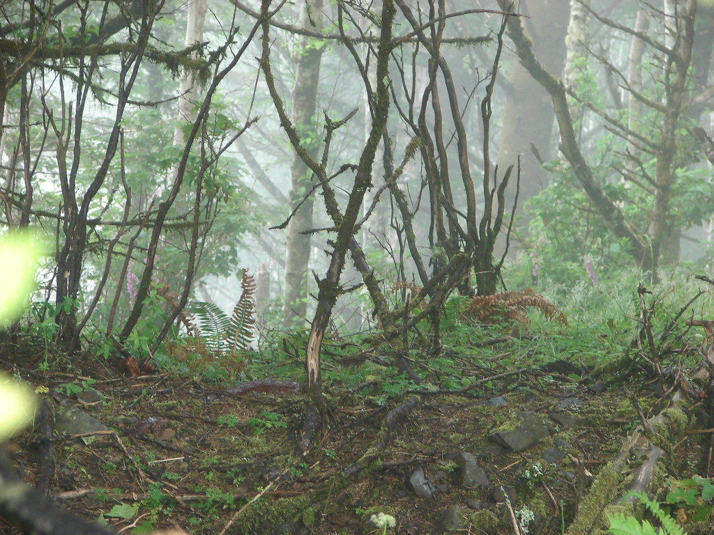 Forest on Cascade Head