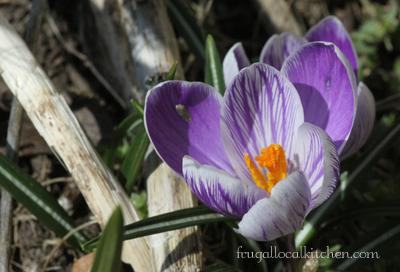 signs_spring_garden_5