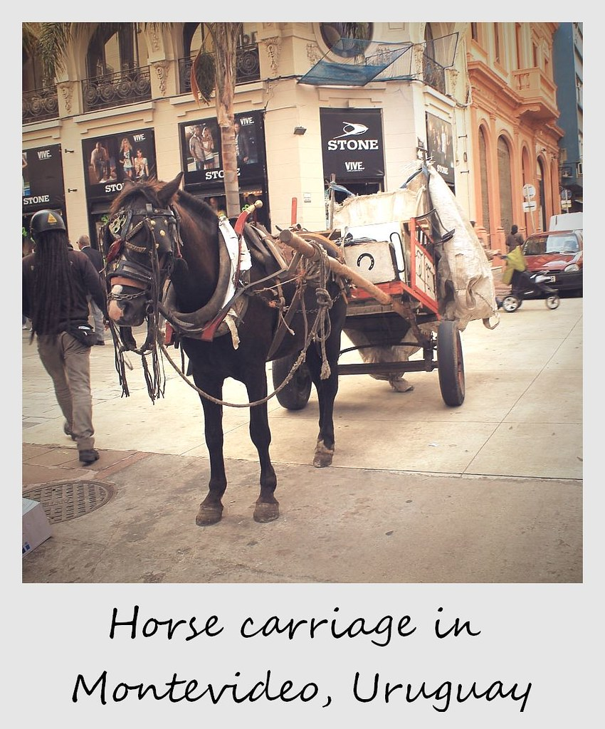 polaroid of the week uruguay montevideo horse carriage
