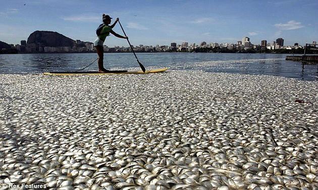 peces-diarioecologia