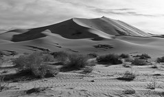Drifting Sand and Scrub at the Foot of Eureka Dunes