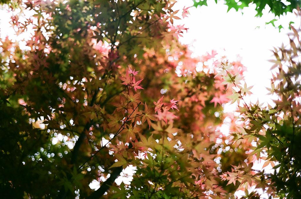 2013 陰天拍的一些花花草草