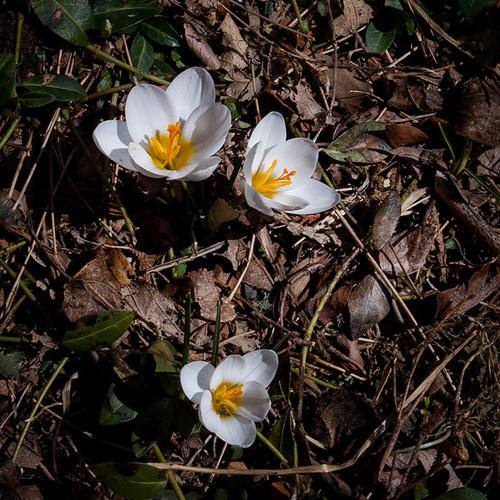 Spring Wake-Up