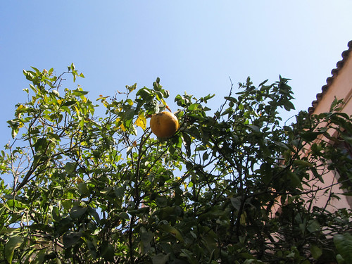 Sucre: el Convento de la Recoleta et ses orangers