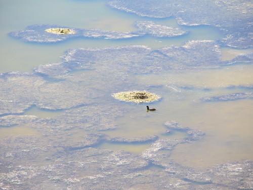 Le Sud Lipez: la Laguna Negra et ses canards noirs