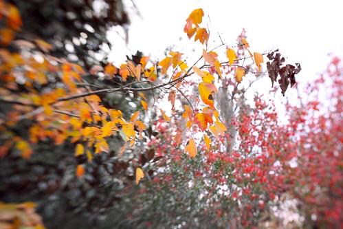 fall burst