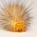 Buff Ermine Caterpillar (Spilosoma luteum)