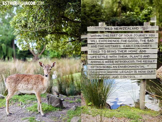 Willowbank Wildlife Reserve New Zealand Animals | A Guide to South Island New Zealand