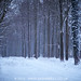 Snow in the Woods by Sasha L'Estrange-Bell