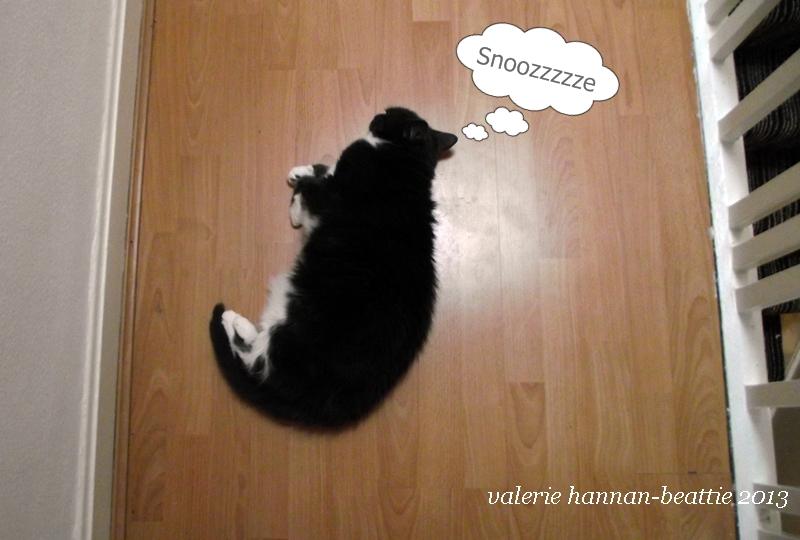 LAZY CAT FAST ASLEEP