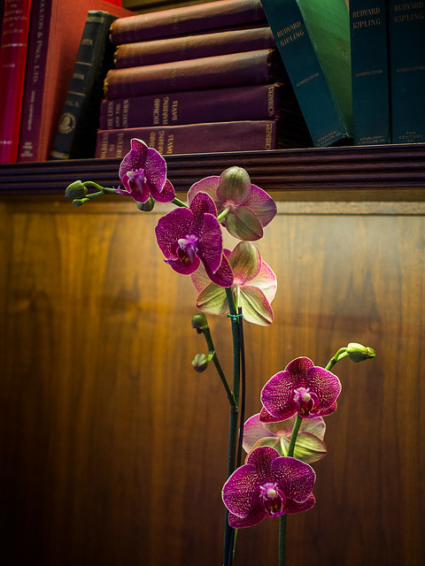 Olympus 17mm f/1.8 Test: The Orchid in the Library