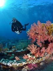 Coloured coral on Jolanda wreck