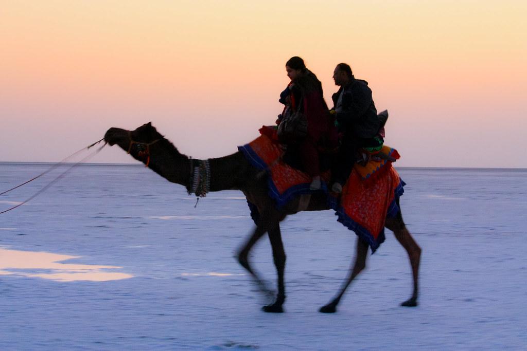 Camel Safari The Great Rann Of Kutch
