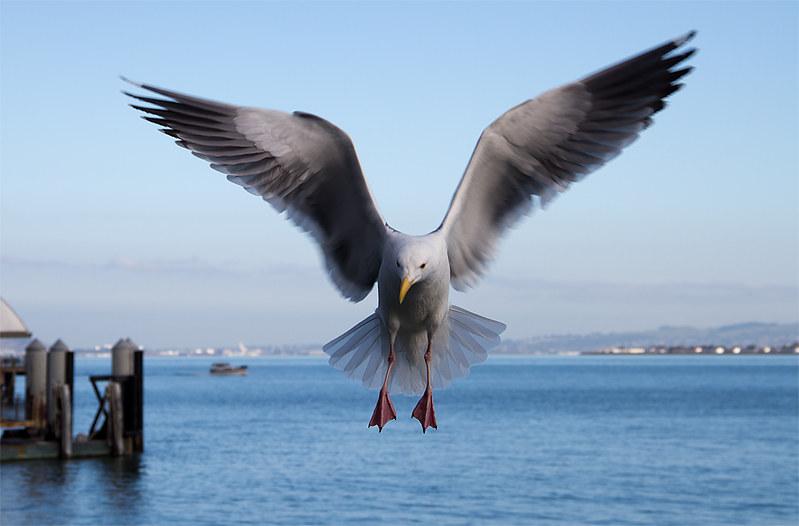 gull1189