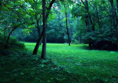trees ohio summer home field backyard grove cincinnati meadow hills dell summertime shady blackwalnut hiil isupposeishouldhaveputadeerintothescenehmm