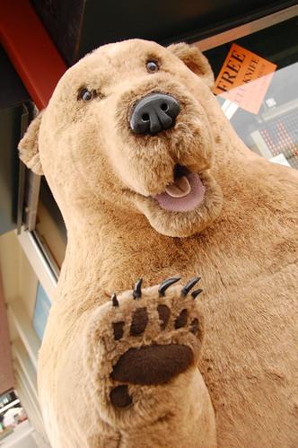 bear attack in alaska