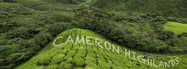 Travel Cameron Highlands
