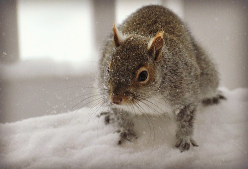 ~Where are the peanuts? I traveled a long way in this blizzard!~
