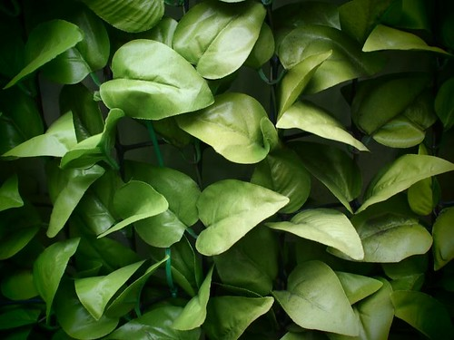 False leaves