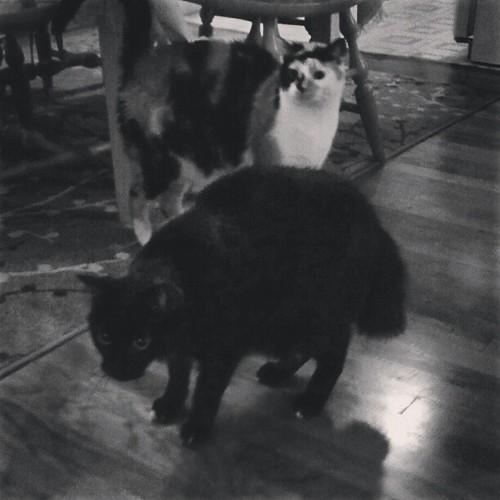 Intruder alert.