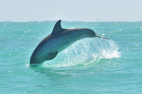 florida-key-west-dolphin119