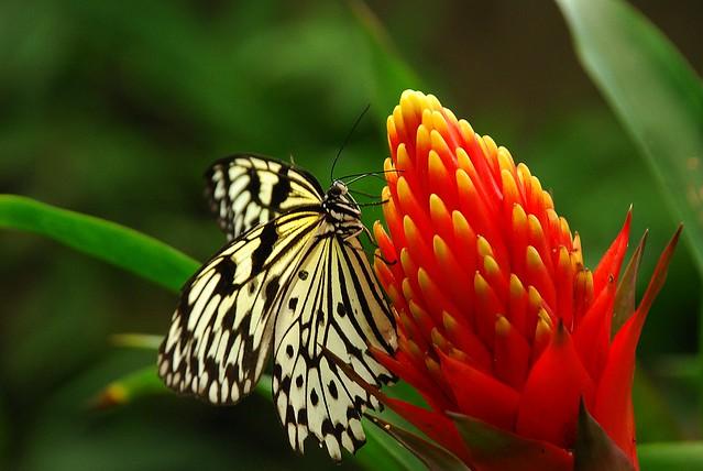 Para tí. Feliz jueves con flores. (Explore 13.03.2013)