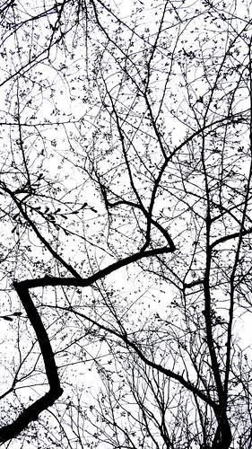 2013-03-17 13-45-14.jpg