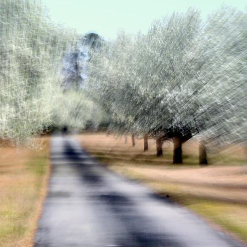 landscape march spring bradford zoom blossom northcarolina pear bloom 41 allée newbern treesinarow 113picturesin2013