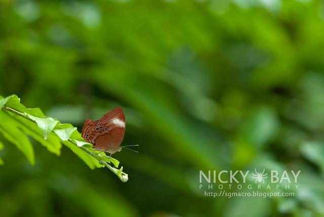 Butterfly - DSC_5425