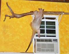 A good climber