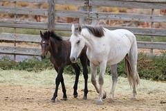 Oregon's Wild Horse Corral Facility