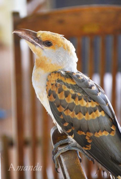 bird_6678 e
