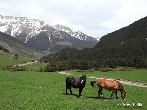 Paisaje del Valle de Aran con caballos