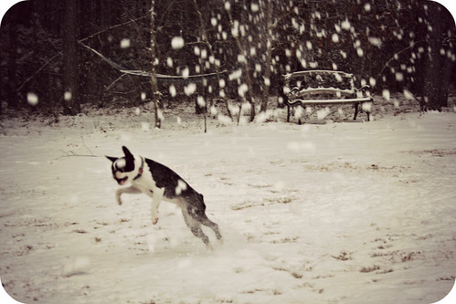 Charlies 2nd Snow Jan 2013 011edit