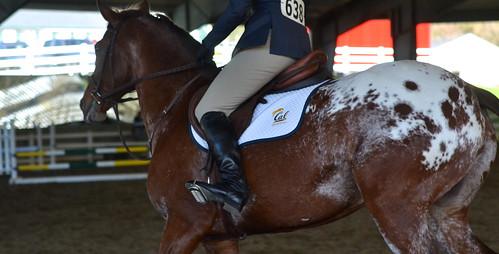 SSU Equestrian at Berkley