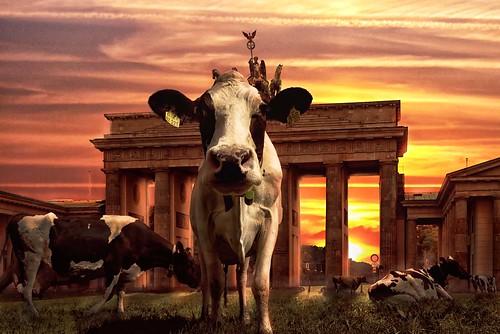 [フリー画像素材] グラフィック, フォトレタッチ, 動物 (哺乳類), 牛・ウシ, 朝焼け・夕焼け ID:201302051000