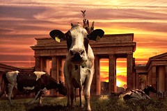 [Free Images] Graphics, Photo Manipulation, Animals (Mammals), Cattles / Cows, Sunrise / Sunset ID:201302051000