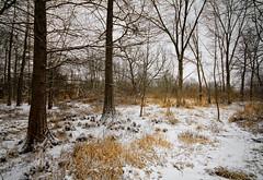 2013 Landscapes color
