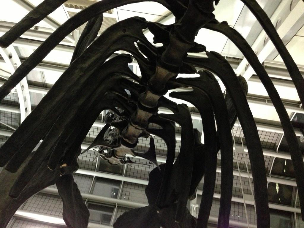 ORD Paleontology